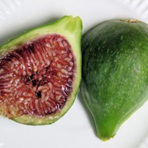 Füge Ficus Carica Verdino fajta