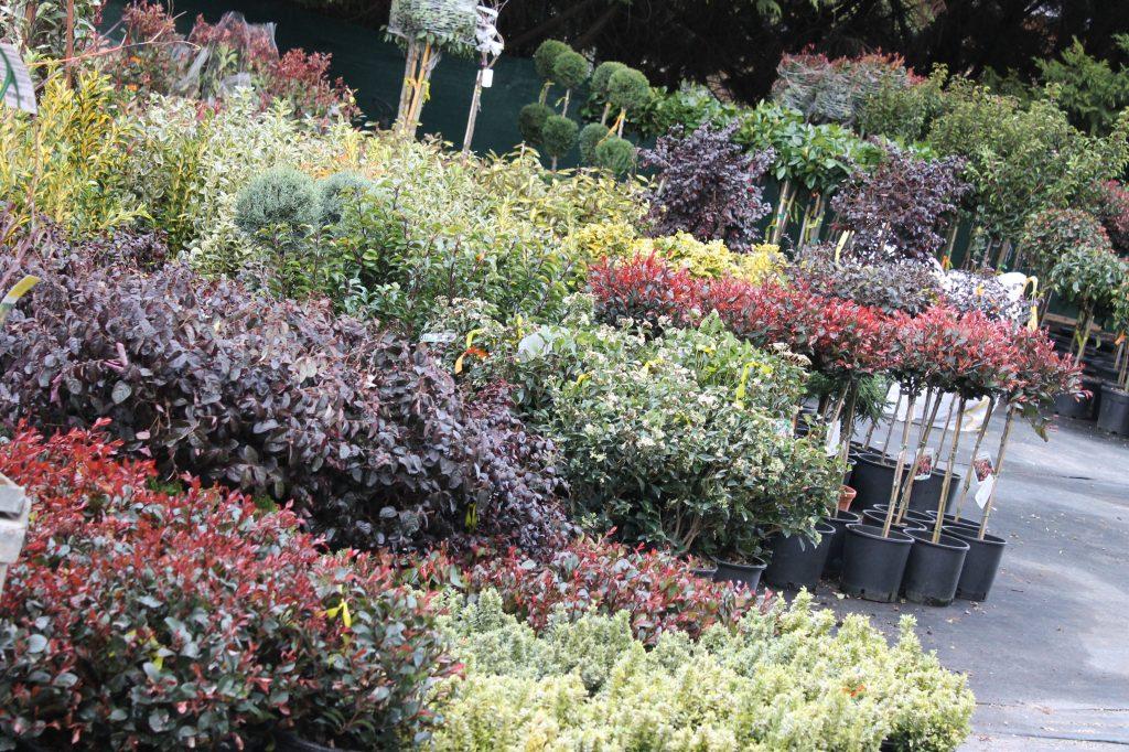 Örökzöld lombú formanövények