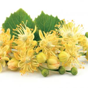 Nagylevelű hárs virág Tilia platyphyllos